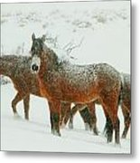 Snow Paints  Metal Print by Jeanne  Bencich-Nations