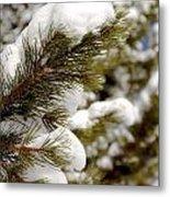 Snow Pine Metal Print