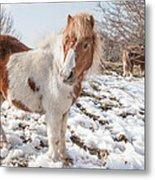 Snow Ponies - Colour Metal Print
