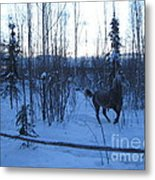 Snow Prancer Metal Print by Elizabeth Stedman