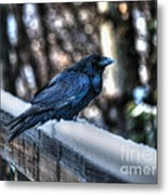 Snow Raven Metal Print by Skye Ryan-Evans