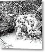 Snow Scene 1 Metal Print by Patrick J Murphy