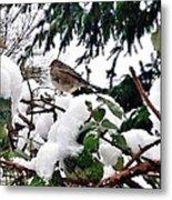 Snow Scene Of Little Bird Perched Metal Print