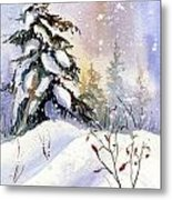 Snow Spruce I Metal Print