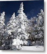 Snow Spruce Sunshine Metal Print