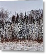 Snow Tree Line Metal Print by Gary Gish