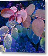 Snowbush Blue Metal Print