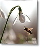 Snowdrops And The Bee Metal Print