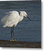 snowey Egret by Water's Edge Metal Print