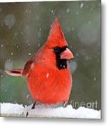 Snowflake Cardinal Metal Print