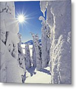 Snowscape Snow Covered Trees And Bright Sun Metal Print