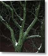 Snowy Branches Metal Print by Guy Ricketts