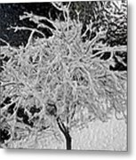 Snowy Branches In Darkness Metal Print