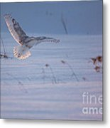 Snowy Coming In For Landing Metal Print