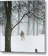 Snowy Deer Metal Print
