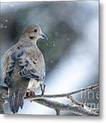 Snowy Dove Metal Print