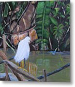 Snowy Egret In Costa Rica Metal Print