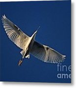 Snowy Egret In Flight Metal Print