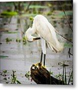 Snowy Egret In Swamp Metal Print