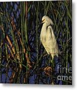 Snowy Egret In The Reeds Metal Print