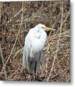 Snowy Egret On The Marsh Metal Print