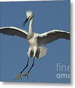 Snowy Egret Photo Metal Print