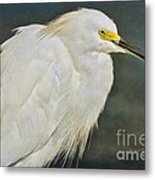 Snowy Egret Portrait Metal Print