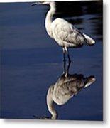 Snowy Egret Reflection  Metal Print