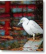 Snowy Egret Stalking His Lunch Metal Print