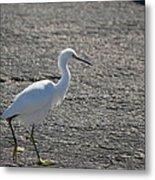 Snowy Egret Walk Metal Print