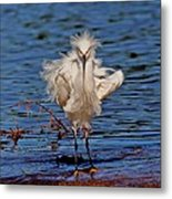 Snowy Egret With Yellow Feet Metal Print