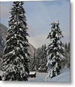 Snowy Fir Trees  Metal Print