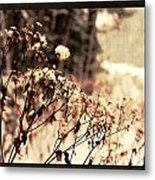 Snowy Flowes And Layers Metal Print