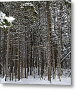 Snowy Forest In Acadia Metal Print