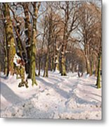 Snowy Forest Road In Sunlight Metal Print
