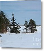 Snowy Hillside With Evergreen Trees And Bluesky Metal Print