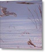 Snowy In Sunset Flight Metal Print