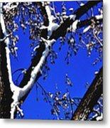 Snowy Limbs 14051 Metal Print