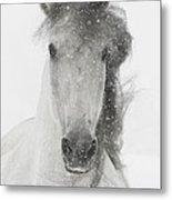 Snowy Mare Metal Print