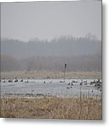 Snowy Morning On The Pond Metal Print