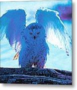 Snowy Owl Drying After Bath Metal Print