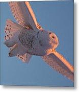 Snowy Owl Flight Metal Print