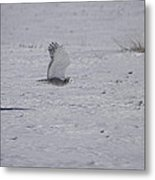 Snowy Owl In Flight 2 Metal Print