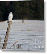 Snowy Owl Landscape Metal Print