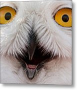 Snowy Owl Up Close And Personal Metal Print