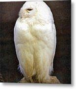Snowy Owl Vintage  Metal Print