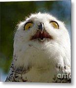 Snowy Owl With Big Eyes Metal Print