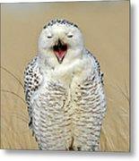 Snowy Owl Yawning Metal Print