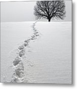 Snowy Path Metal Print by Diane Diederich