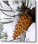 Snowy Pine Cone Metal Print